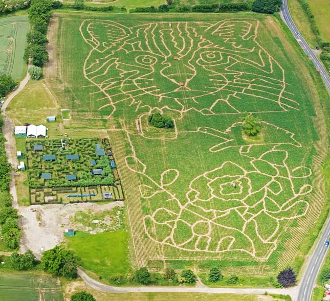 Ariel photo of the 3 Maize mazes at Elton Fram in 2015