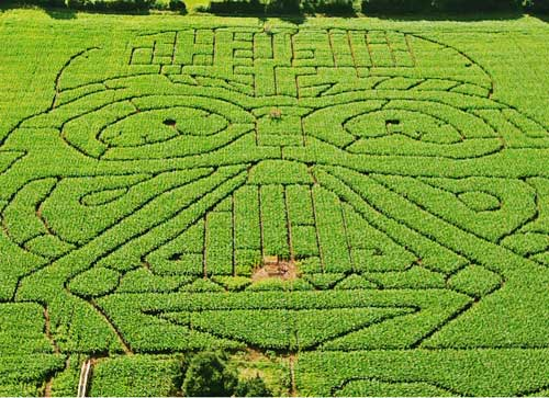 A drone photo of the Giant InVader Maze at Elton Giant Mazes
