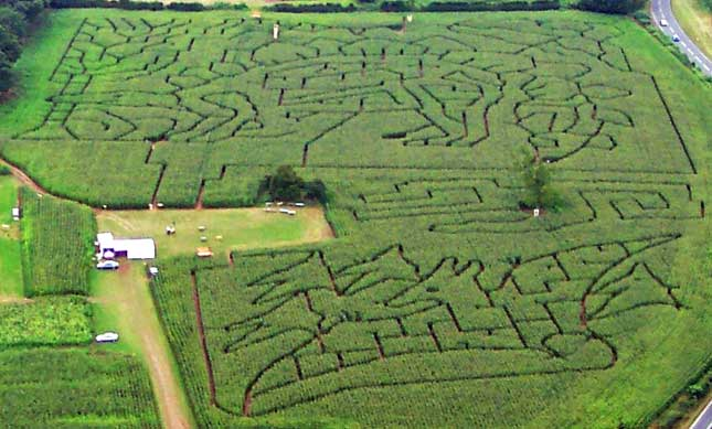 2005 Dinosaur Maze