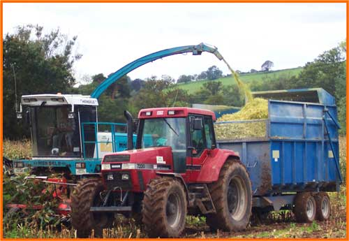 Harvesting the Maize