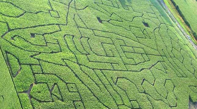 Shark Maze in 2006